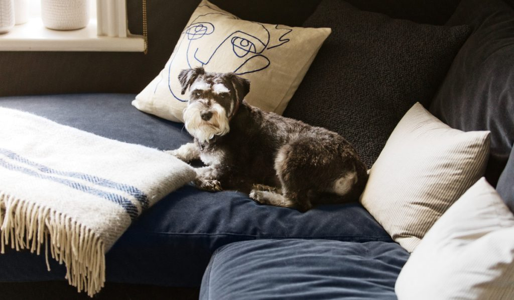 Interior Design for Dogs